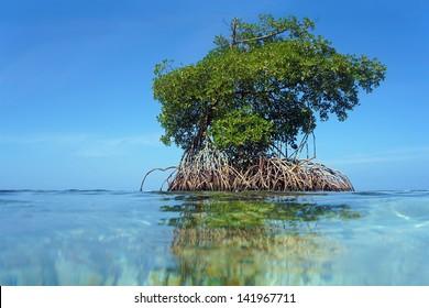 Mangrove tree islet viewed from the water surface, Bocas del Toro,Caribbean sea, Panama