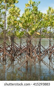 mangrove tree Preserve ecosystem
