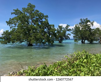 Mangrove trees in the clear water beach, Ambon Indonesia