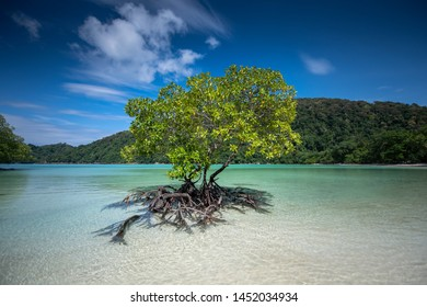 Mangrove trees grow alone on the beach.