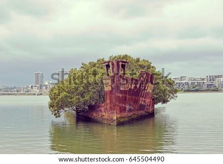 Mangrove trees growing on