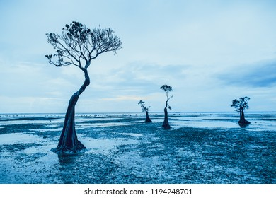 Mangrove trees silhouettes. Blue grey tints background. Magnificent art image. Perfect mix blue, white and grey colors. Sumba island, Indonesia. Ideal background for the illustrations and collages.