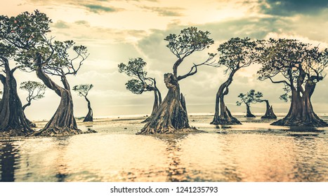 Mangrove trees silhouettes, reflected in ocean water. Amazing scene the bright sunset over the mangroves. Sumba island, Indonesia. Ideal background for various illustrations