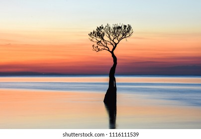 Mangrove in Walakiri Beach, after sunset, East Sumba, Indonesia