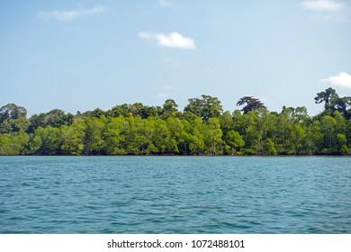 Mangrove water Mangrove seedlings Mangrove forest Aquatic nursery Forest protection. Wetland Mangrove wall against sea water.