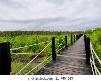 Forest Mangrove Forest Wood bridge