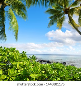 Mangroves and coconut palm trees on west coastline of Mauritius island. Indian ocean.