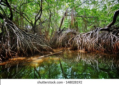 Mangroves in the delta of the tropical river. Sri Lanka, Bentota