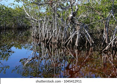 The mangroves of Everglades National Park, Florida reflecting in a waterway of Hell's bay trail.
