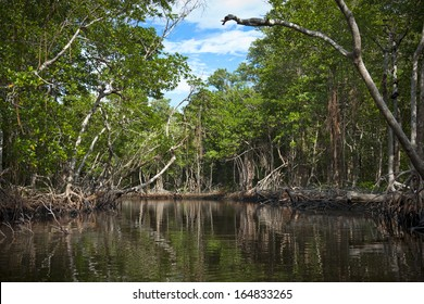 Mangroves in the Florida everglades