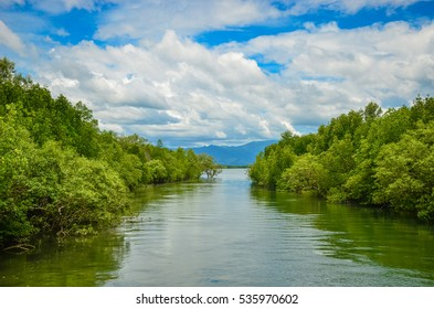 Mangroves forest and the canal in Thailand