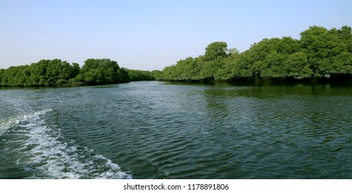 Mangroves forest with coastal line in Sindh, Pakistan
