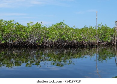 mangroves in honduras