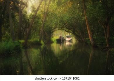 In the mangroves of Kerala backwaters