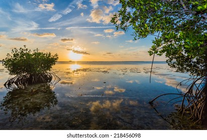 Mangroves line Florida Keys shoreline at sunset
