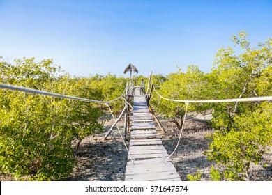 Mangroves. Mida Creek. Watamu, Kenya.