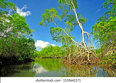 Mangroves in northern Ecuador