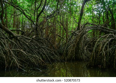 The mangroves on the lake