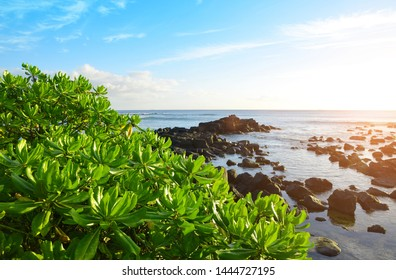 Mangroves on west coastline of Mauritius island at sunset. Indian ocean.