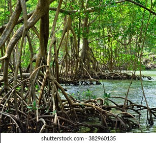 Mangroves in the Parque Nacional Los Haitises.