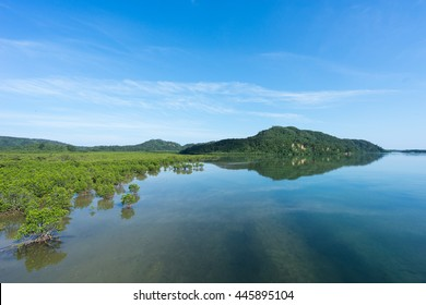Mangroves reflecting in the calm morning water in Iriomote jima, a tropical island in Okinawa prefecture, Japan