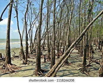mangroves at Sundarban, Bangladesh