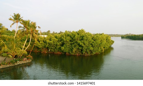Mangroves  are trees or shrubs that grow in salty water in hot places like the tropics.Mangroves make a special saltwater woodland or shrubland habitat, called a mangrove swamp, mangrove forest, mangr