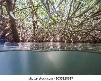 mangroves    Views around the small Caribbean island of Curacao