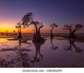 The Mangroves of Walakiri Beach, Sumba Island, Indonesia