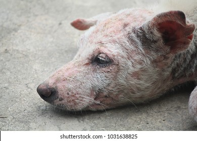 Mangy Dog Images, Stock Photos & Vectors | Shutterstock
