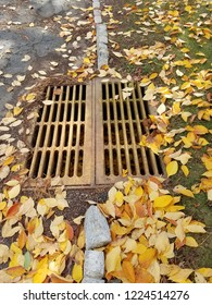 Manhole with leaves