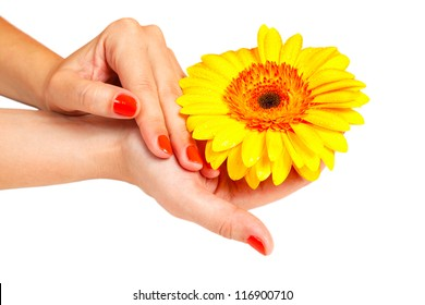 manicure hands young woman and gerber isolated