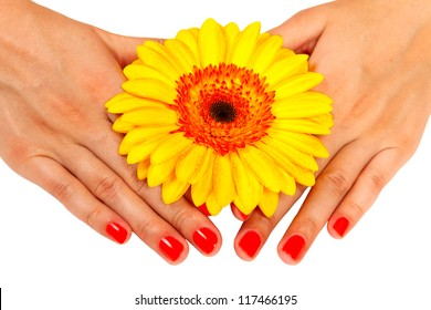 manicure on hands young woman and gerber isolated