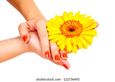 manicure on hands of a young woman and gerbera isolated
