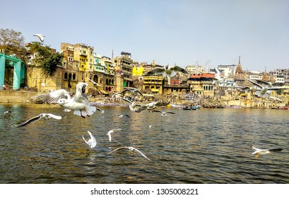 Manikarnika Ghat, River Ganges, Varanasi, Uttar Pradesh, India; 30-Jan-2019; Siberian migratory birds over river Ganges in Varanasi, Uttar Pradesh, India