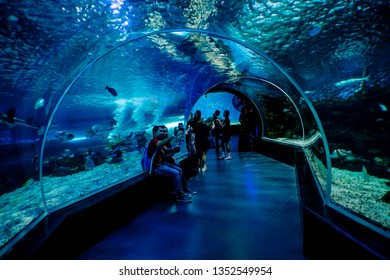 MANILA, PHILIPPINES - MARCH 17: Underwater tunnel , Manila, Philippines. In terms of floor space, oceanarium is larger than oceanarium in Singapore, features a 25-metre tunnel