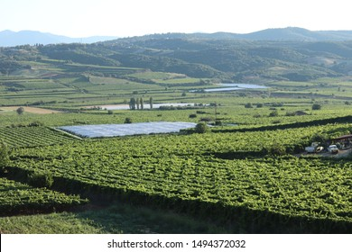 Manisa/Turkey - 07/12/2019: Picture of agricultural land from the hill. In the farms apple and grape is being cultivated.