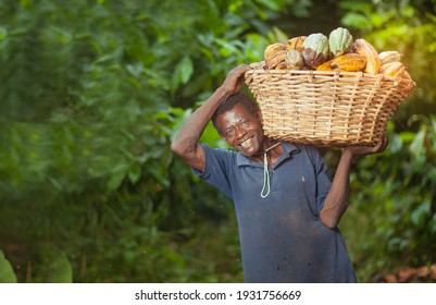 MANKRANSO,GHANA- JUNE 14, 2018: A man carrying a basket of harvested cocoa pods.