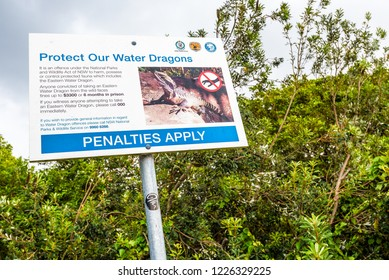 Manly Beach, Sydney, Australia. March 2017. Sign from the New South Wales National Parks and Wildlife Service asking to protect the Australian Eastern Water Dragon