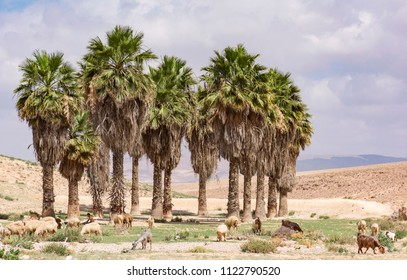 a man-made artificial oasis in the judaean desert in the negev near Arad, Israel