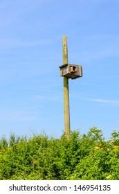 A man-made barn owl nesting box