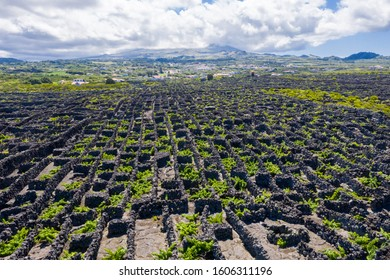 Man-made landscape of the Pico Island Vineyard Culture, Azores, Portugal. Pattern of spaced-out, long linear walls running inland from, and parallel to, the rocky shore with Pico volcano in background