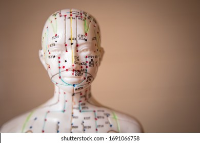 Mannequin with acupuncture points and meridians