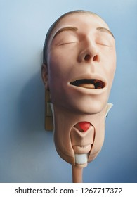 Mannequin for airway instrumentation and tracheostomy practice drills for doctors in the emergency department.