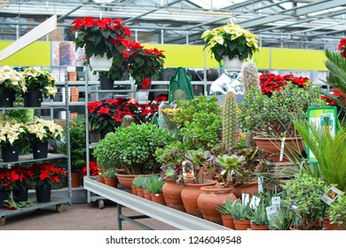 Mannheim, Germany, 30.11.2018 Inside of a home and garden plant specialist retail store with potted homeplants and winter roses in the background