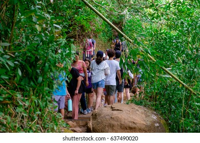 MANOA FALLS, HAWAII - FEBRUARY 20, 2017: An overwhelming crowd of people on the trail to Manoa Falls in Oahu Hawaii.