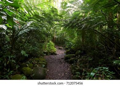 Manoa Falls Hike Trail