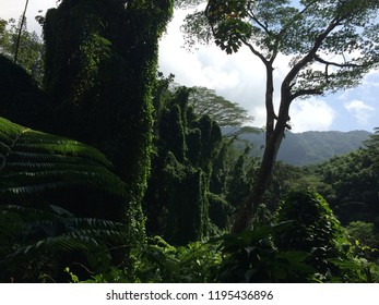 Manoa Falls Trail Hike, Oahu, Hawaii
