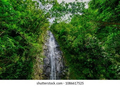 Manoa Falls waterfall emptying into a tiny pond in Hawaii