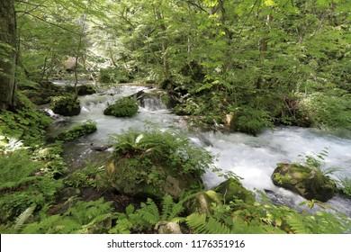 Manryo current of Oirase mountain stream in Aomori, Japan
